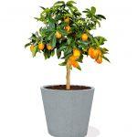Scheurich_C-Cone_Stony_Grey_bepflanzt